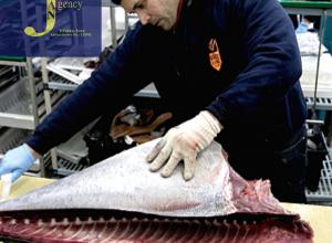 استخدام فوری نیرو برش دهنده و تمیز کننده شیلات ماهی